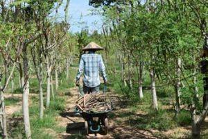 Organic Moringa products made by Baca Villa in Cambodia.