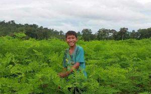 Baca-Villa organic Moringa farm, 100ha in the middle of the forest in Cambodia.