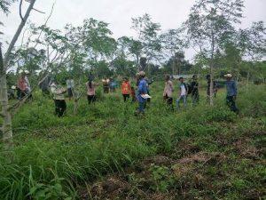 Moringa helps farmers.