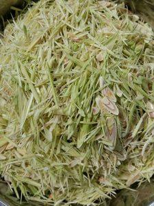 Fresh-Organic-Lemongrass-Baca-Villa