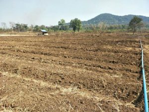 Start-Prepare-New-Organic-Land